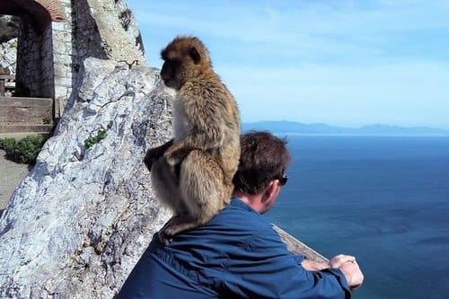 Индивидуальная экскурсия в Гибралтар с Коста дель Соль